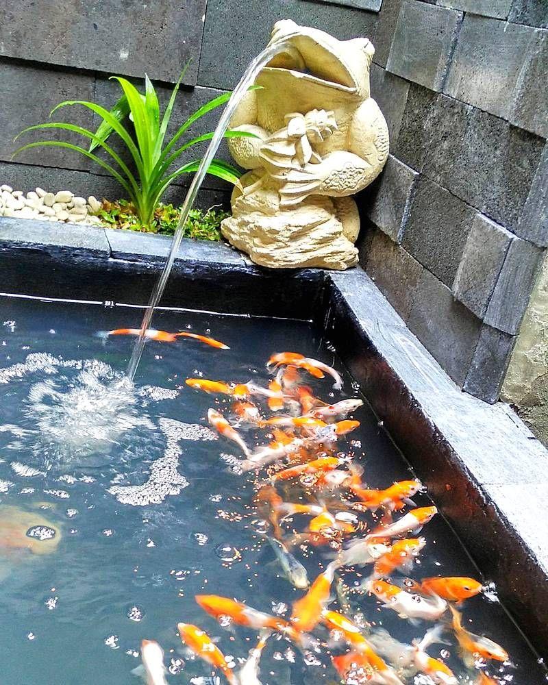 Kolam Ikan Koi Kolam Ikan Minimalis Pinterest Koi And House