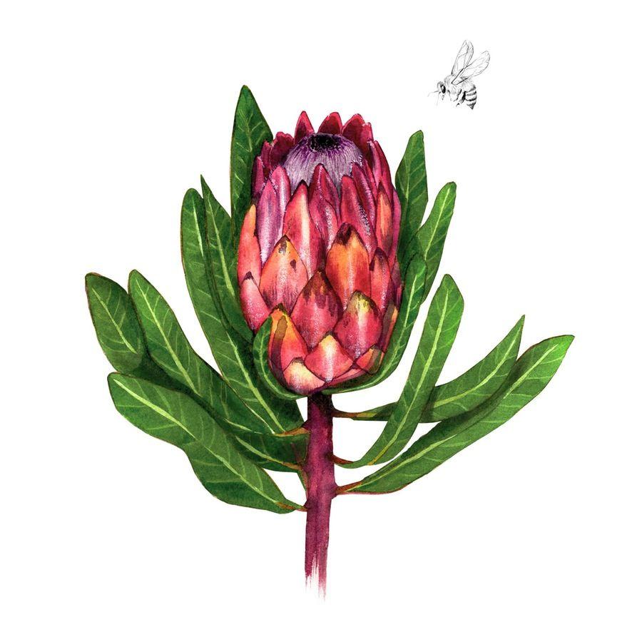 Protea and the bee  Sarah Jane Lightfoot