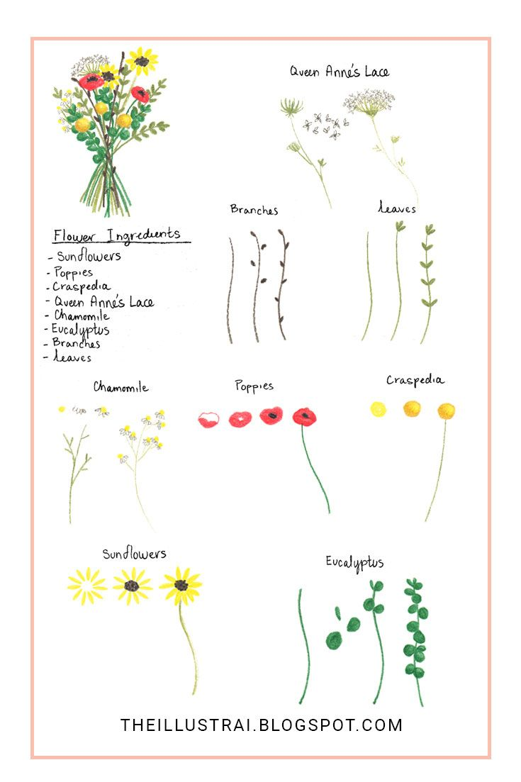 How To Draw An Autumn Flower Bouquet Autumn Flowers Drawings And