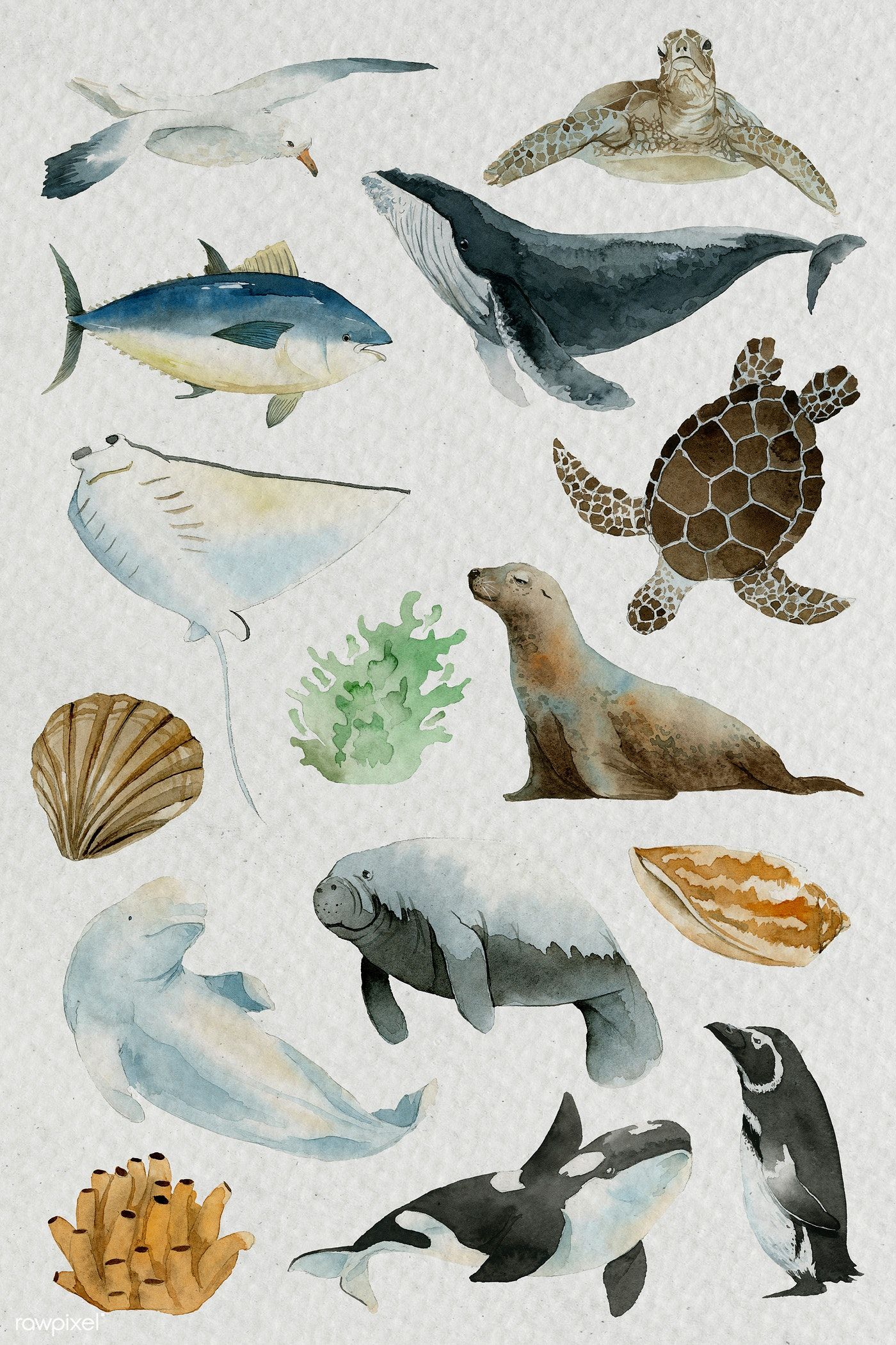 Download Premium Illustration Of Animals From The Sea In