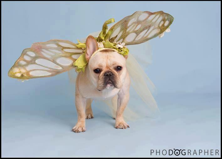 Frenchie Fairy French Bulldog Cute Animals French Bulldog