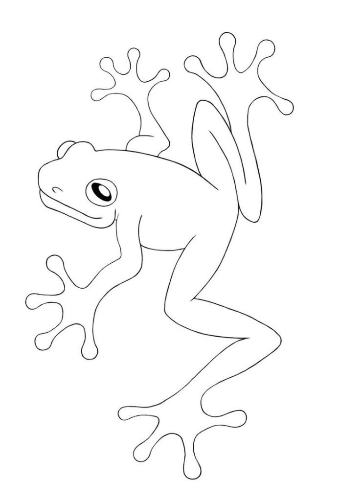 Cool Red Eyed Tree Frog Coloring Pages
