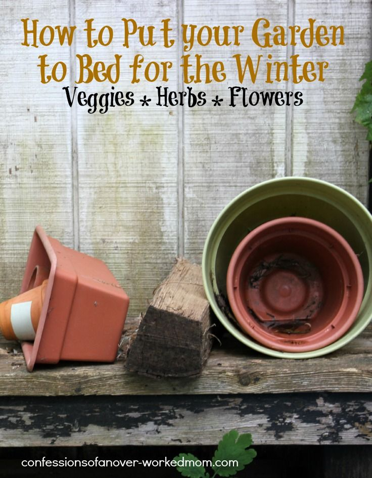 Putting The Garden To Bed For Winter Winter Vegetables Gardening Winter Vegetables Winter Veggies