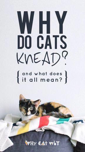 Cats With Cucumbers Cat Behavior Cats Knead Cat Biting