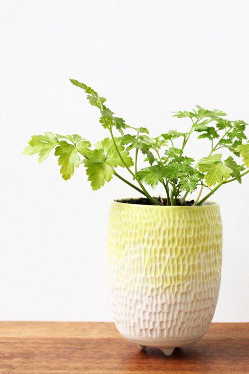 Ombre Planter Neon | sownsow.com.au