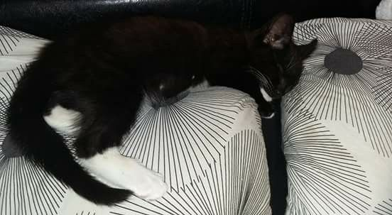 Male Cat Called Sonny L9 Area Liverpool Cats Cat Call