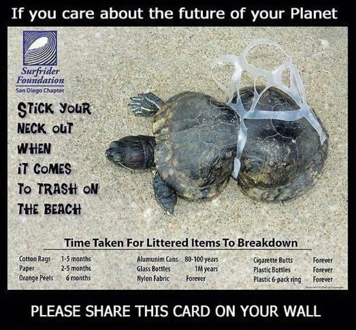A Turtle Deformed Because Of Plastic Please Recycle Or At The - These six pack rings feed sea creatures rather than harm them