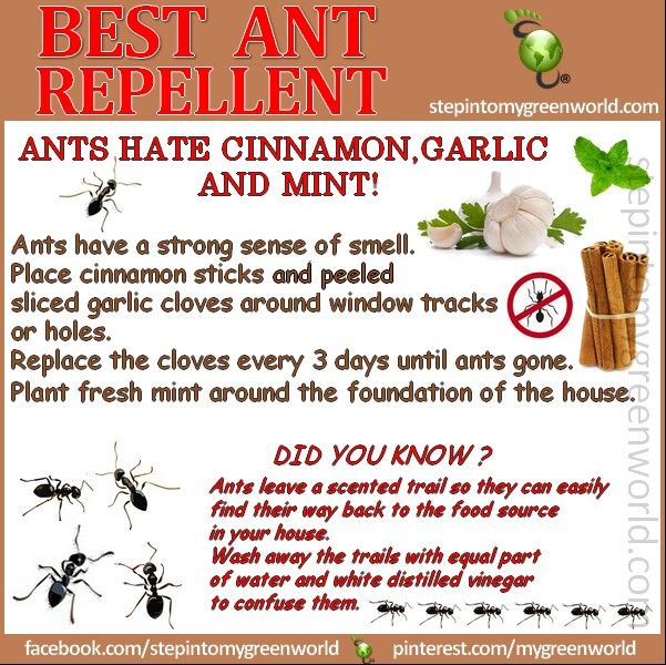 natural ant repellent | Ant repellent, Organic pest ...
