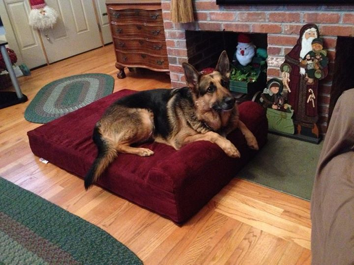 German Shepherd Dog Beds | To get the same bed Axel has, click here:  http://bigbarker.com