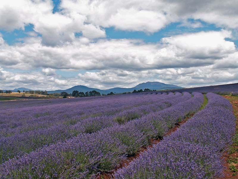 Lilac Field A Photo From Devon England Trekearth Around The Worlds England Natural Landmarks