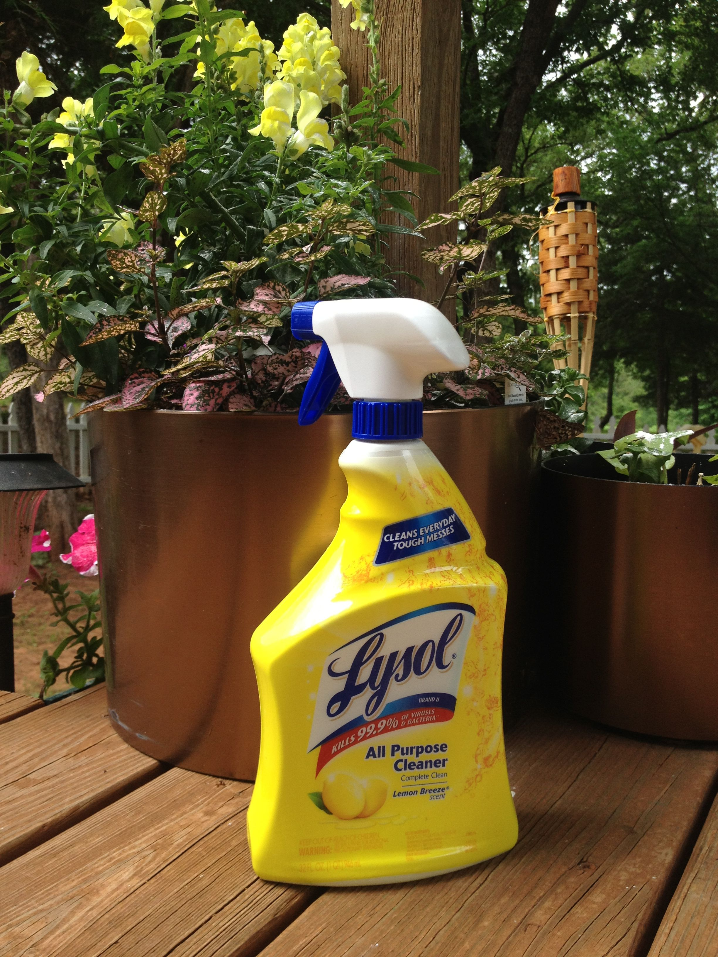 KILL WASPS! Use ANY Household Cleaner! (OR) MIX Dishsoap & Water ...