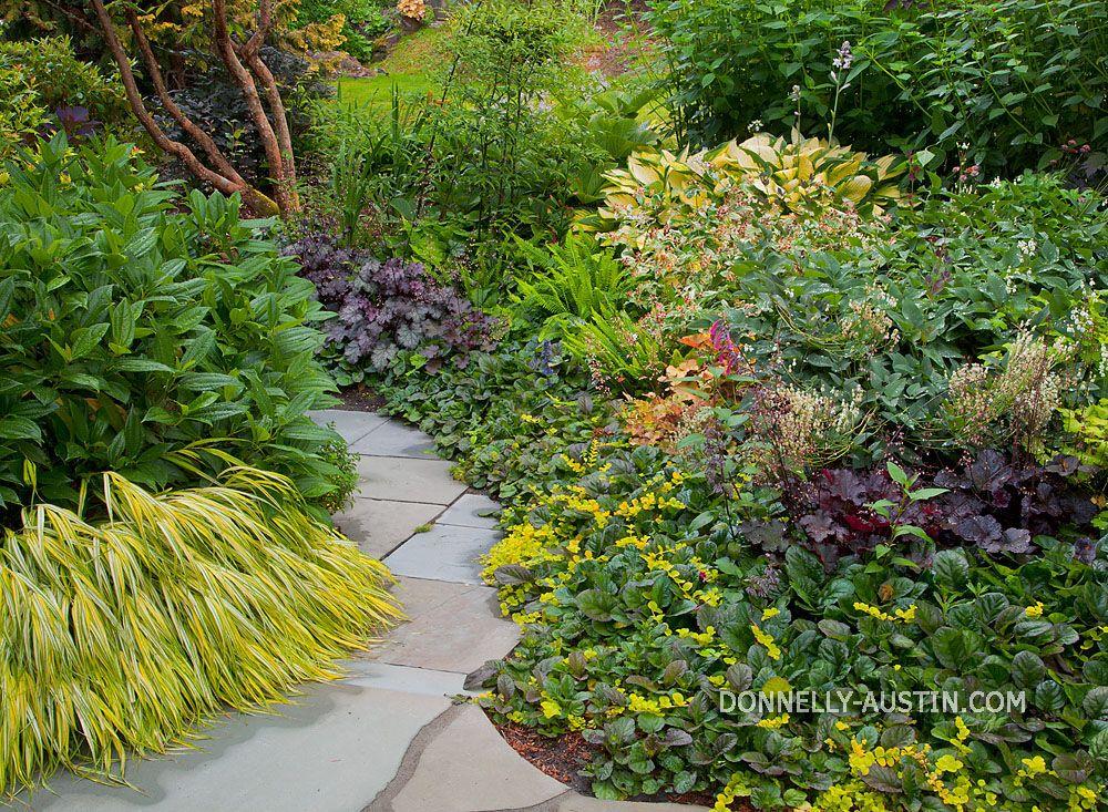 More shade ideas | Shade shrubs, Plants, Garden