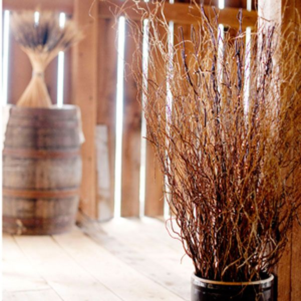 35u0027 tall natural curly willow branches sold by case of 144 branches