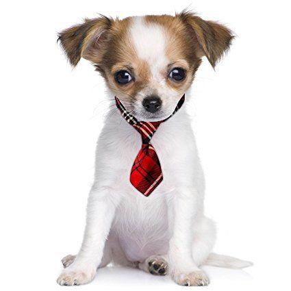 Scottish Scotland Red Tartan Pattern Fancy Dress Cute Pet Dog Cat