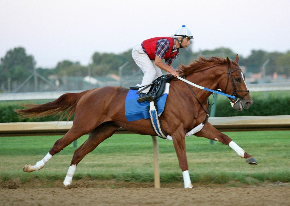 Curlin Horse Racing Horses Thoroughbred Racehorse