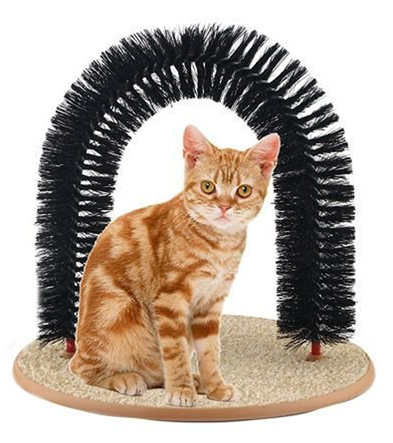 Pin On Cat Grooming