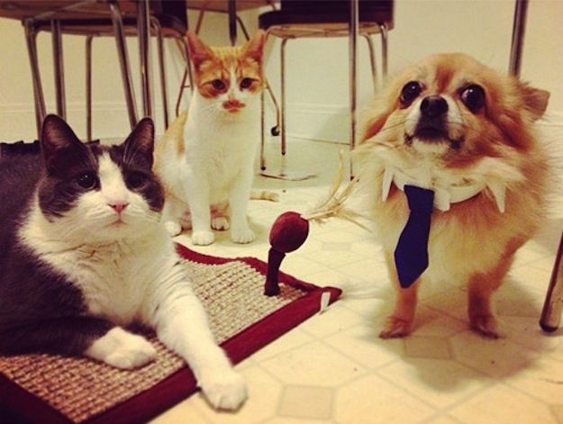 And THIS DOG who CANNOT with what he has to wear to work. | 33 Dogs That Cannot Even Handle It Right Now