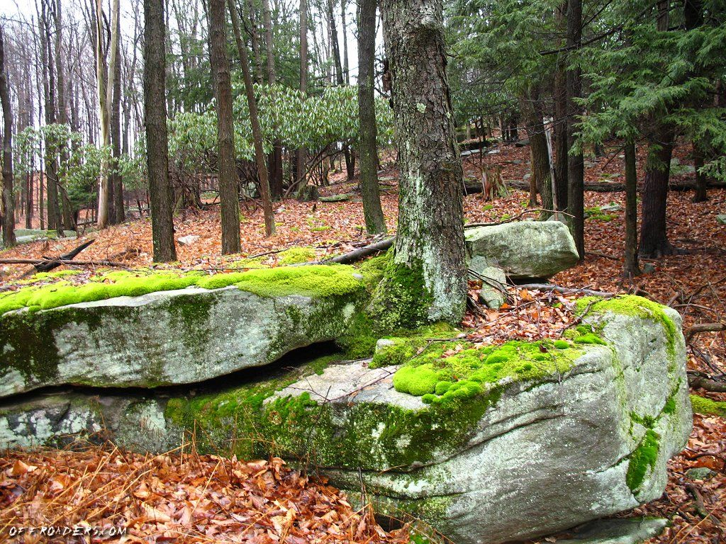 Examples What Is Primary Succession Mossy Medley Pinterest