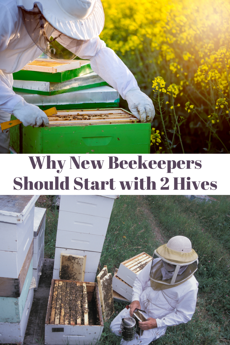 Why New Beekeepers Should Start With Two Hives | Bee ...