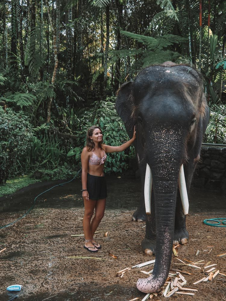 Mason Elephant Sanctuary in Bali, Indonesia Instagram: jonny.melon