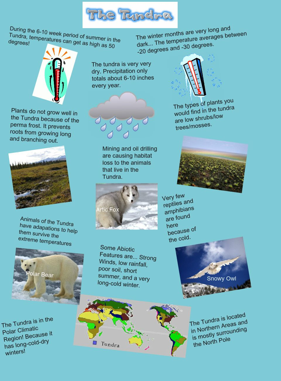 The Tundra Biome Project. Biomes project, Biomes