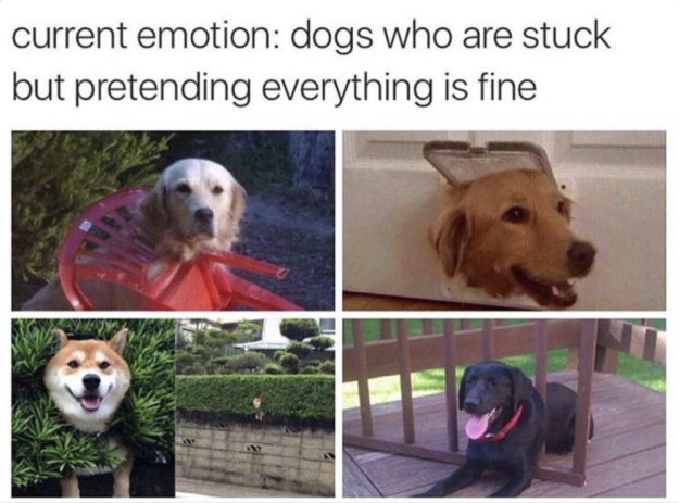 100 Animal Memes That Will Keep You Laughing For Hours Funny Dog Memes Funny Animal Memes Funny Animals