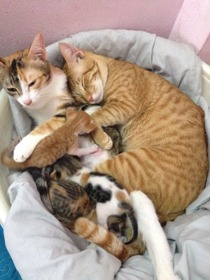 Father Cat Supports Exhausted Mom Cat Who Gave Birth In These 10 Heartwarming Pics Kittens Cutest Mama Cat Cats Kittens