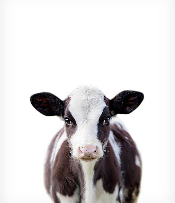 Bébé vache imprimé des animaux de ferme estampes bébé animal | Etsy