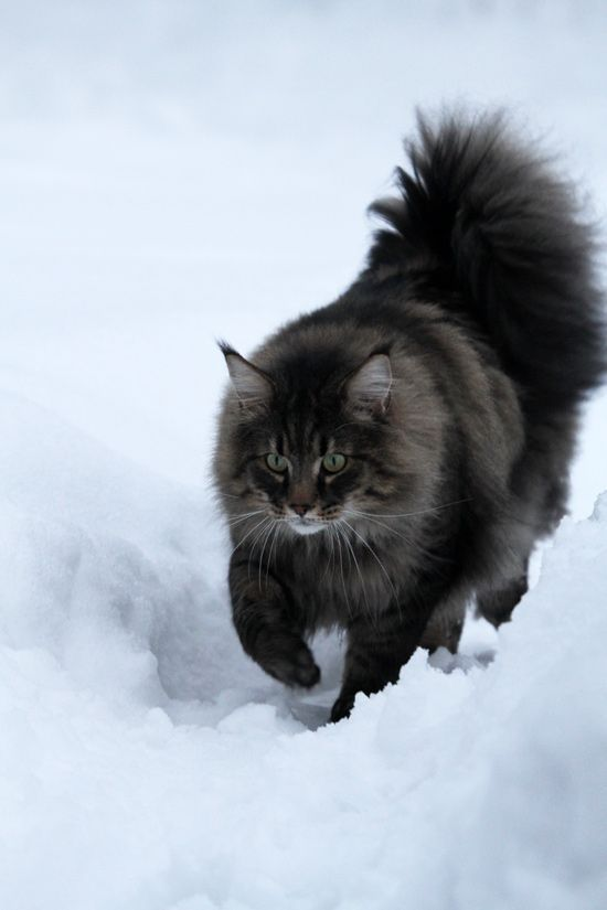 Cats Walking In The Snow For The First Time [VIDEO