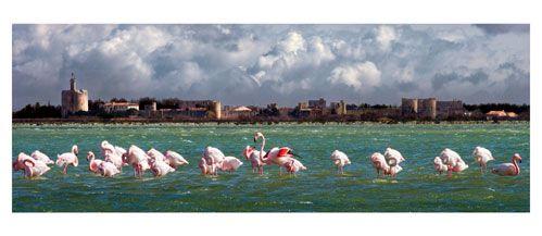 Aigues Mortes - Depuis les berges de l'étang du Médard - Carte Postale panoramique 10x23 ...