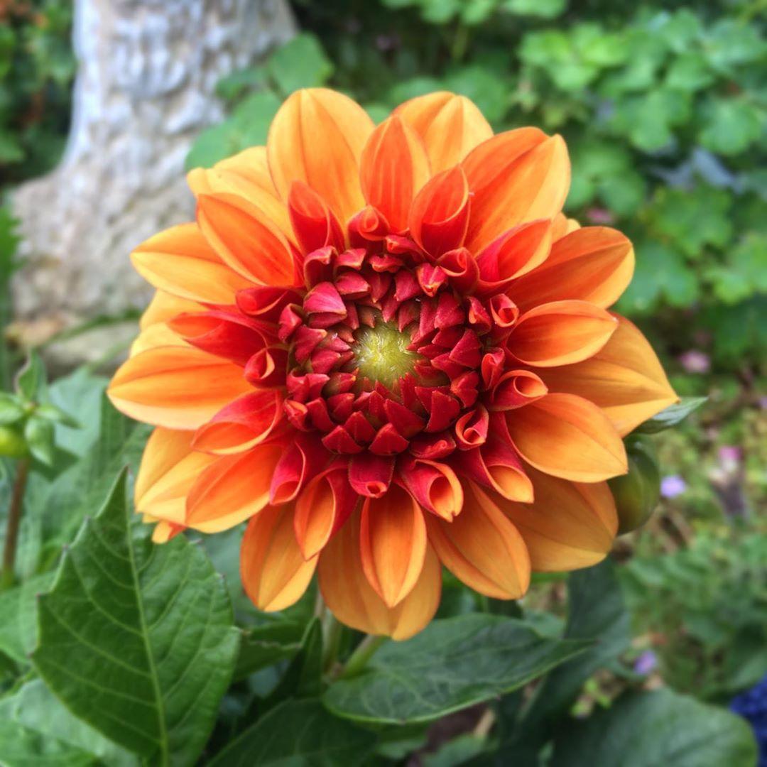 50 Ideen Fur Diy Gartendeko Und Kreative Gartengestaltung Gartendekoration Rasteniya