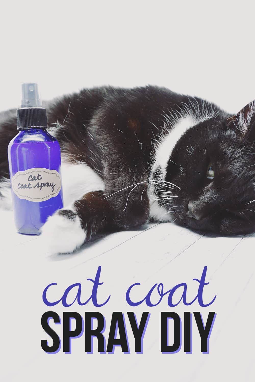 How to Keep Your House Smelling Fresh With Cats