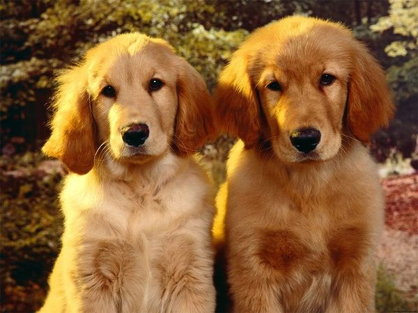 Two cute puppies. puppy-love