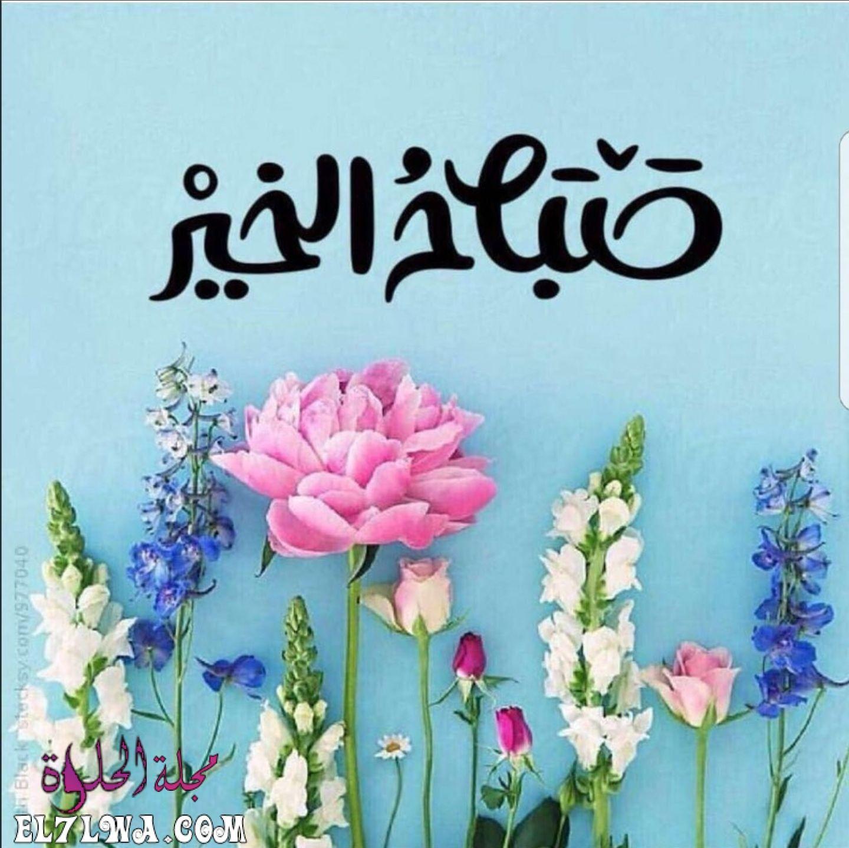 رسائل صباحية للحبيب جريئة مسجات صباحية للحبيب نار من أجمل الصباحات التي تمر على الحبيب والم In 2021 Beautiful Morning Messages Good Morning Roses Good Morning Flowers
