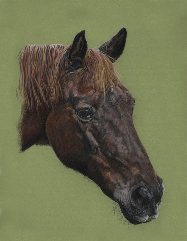 Crackers by ~Utlah on deviantART ~ horse head