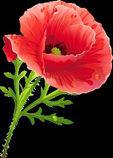 Маки - на прозрачном фоне   Маки, Цветок и Цветы