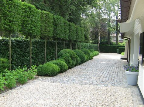 Pleached trees hedges on stilts provide additional - Sichtschutz buro ...