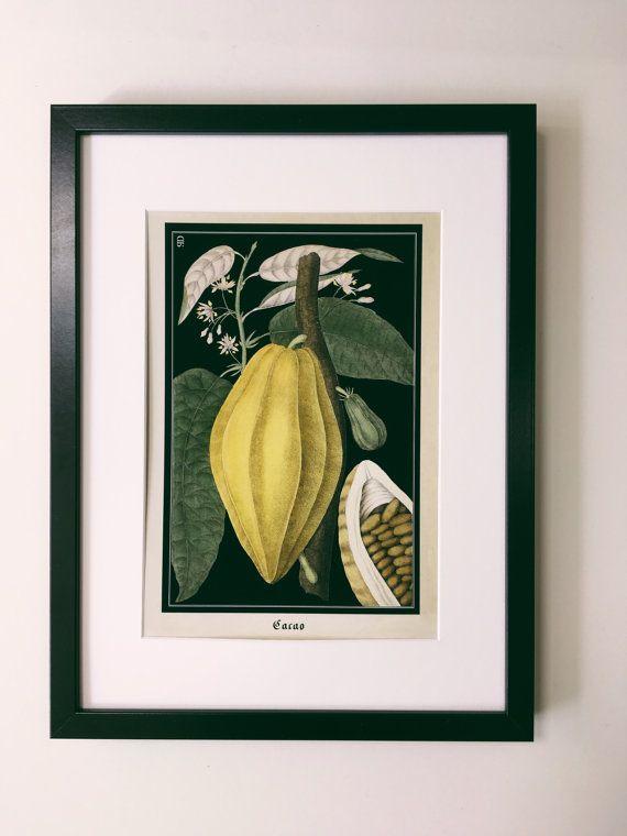 Merveilleux Schokolade Botanische Print   Jahrgang Cacao Botanische Poster   Antiken  Stil Küche Wandkunst   Museums
