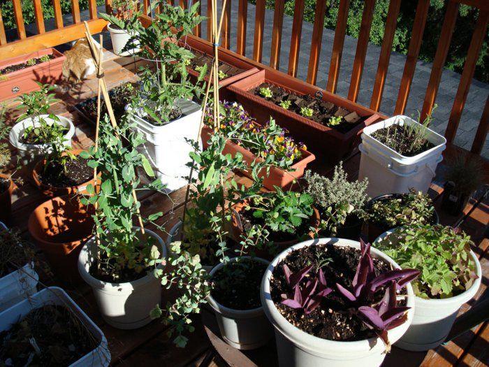 Terrasse Bio Garten Gestalten Tomaten Kräuter