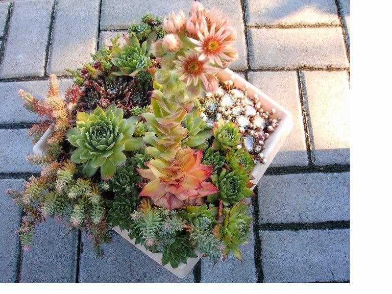 Jakie Rosliny Na Cmentarz Floral Wreath Floral Succulents