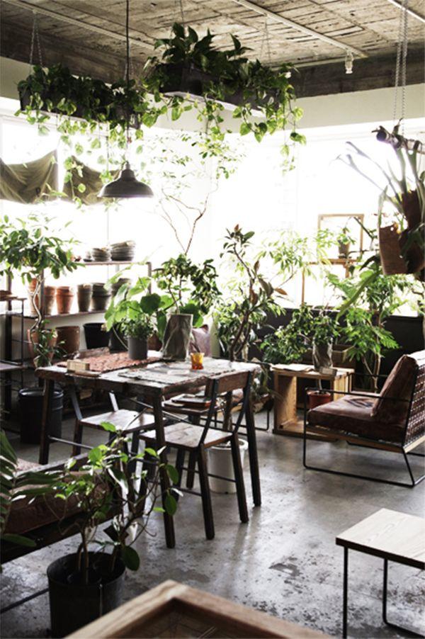 café plantes vertes