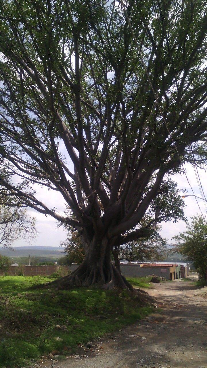 Hermoso árbol