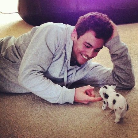 Tom Daley Has A Pet Piglet [UPDATED] | Micro pig, Tom ...
