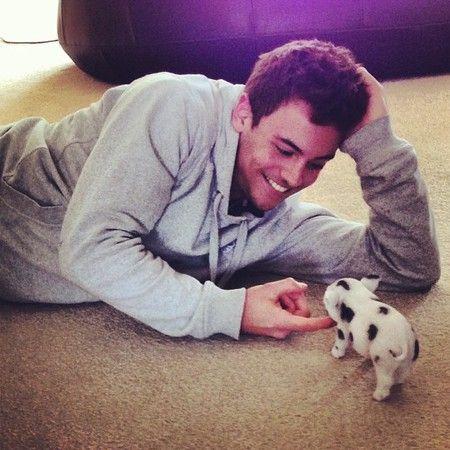 tom-daley-micro-pig. OMG!!! baby pigs = Love