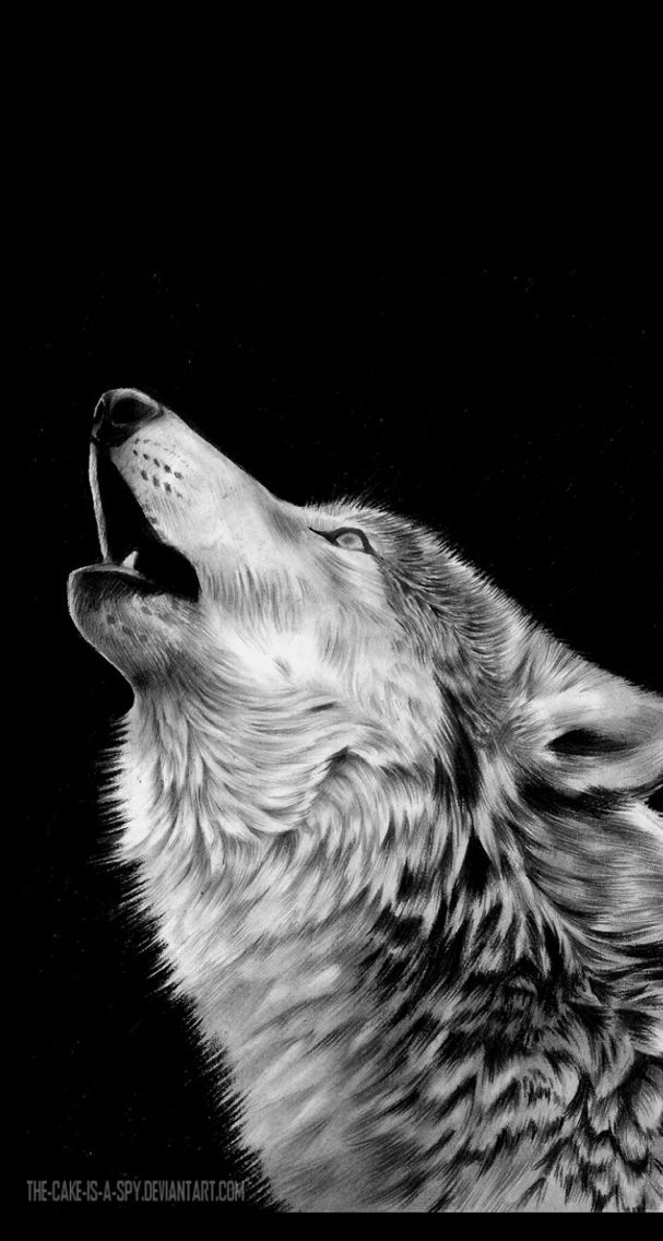Black And White Wolf Wallpaper For Iphone Optimized For Ios