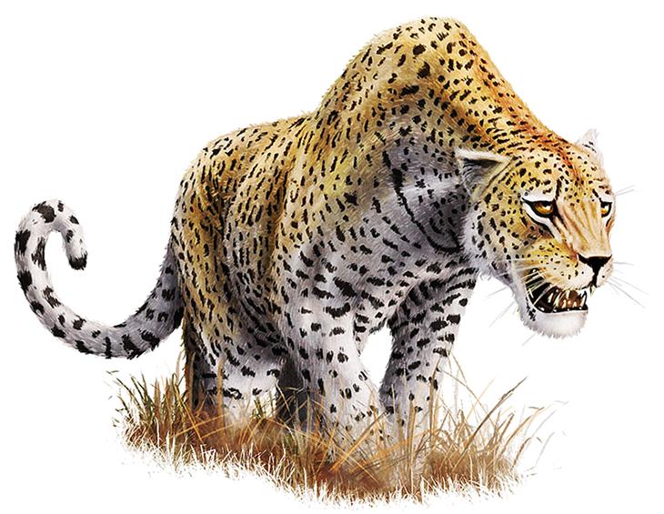 Leopard Download Png Png Image Leopard Pictures Animals Leopard