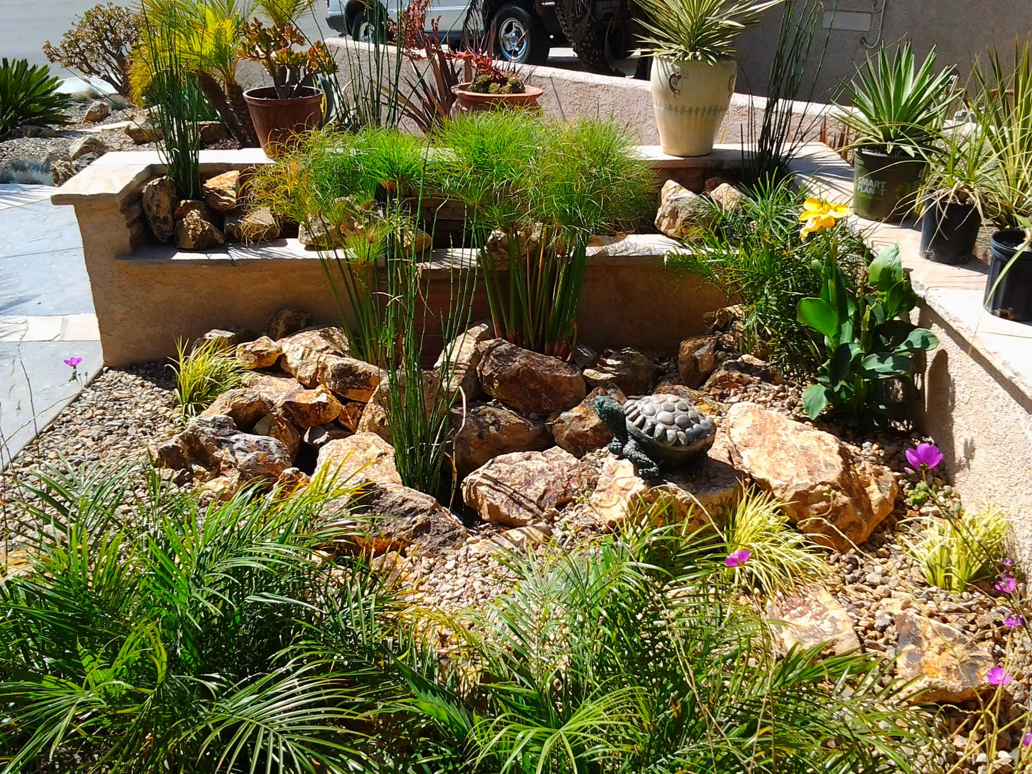 water resistant plants Google Search