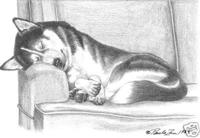 Siberian Husky Art Print Couch Dreams By Paula Zan Husky Drawing Dog Sketch Husky Tattoo Siberian