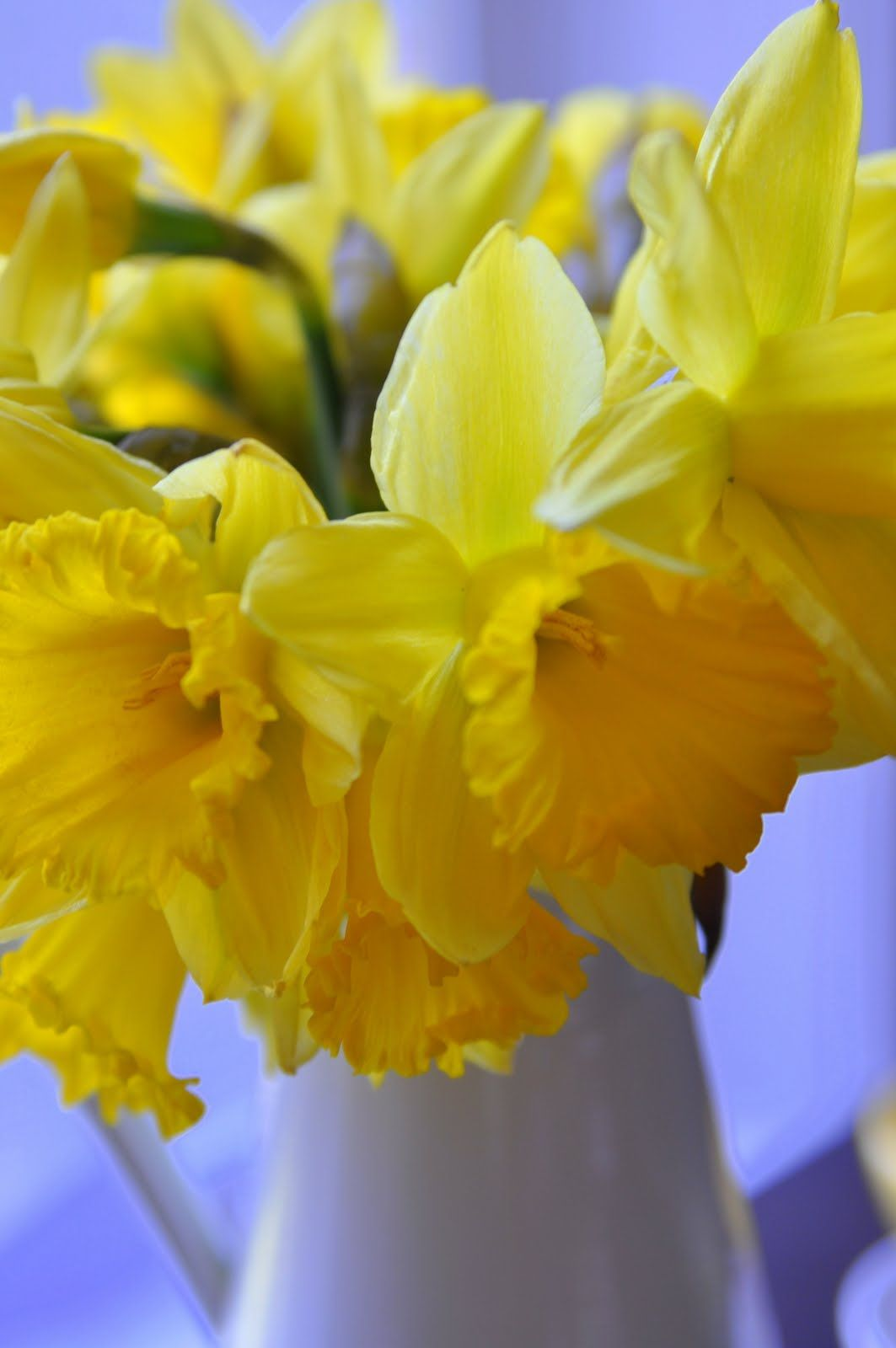 Daffodils Available In White And Yellow With Touches Of Orange