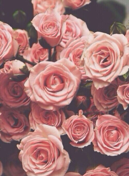 Flowers Pink Roses Iphone Wallpaper Tumblr Hipster Vintage Quotes
